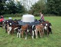 Image of young heifer calves feeding at an auto feeder at The Leen, winning NMR RABDF Gold Cup farm in 2018, illustrating the monthly comment in British Dairying magazine, the publication that supports UK dairy farmers